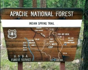 Indian Spring Trail sign in the pine trees