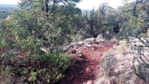 Timber Mesa Trail in Show Low